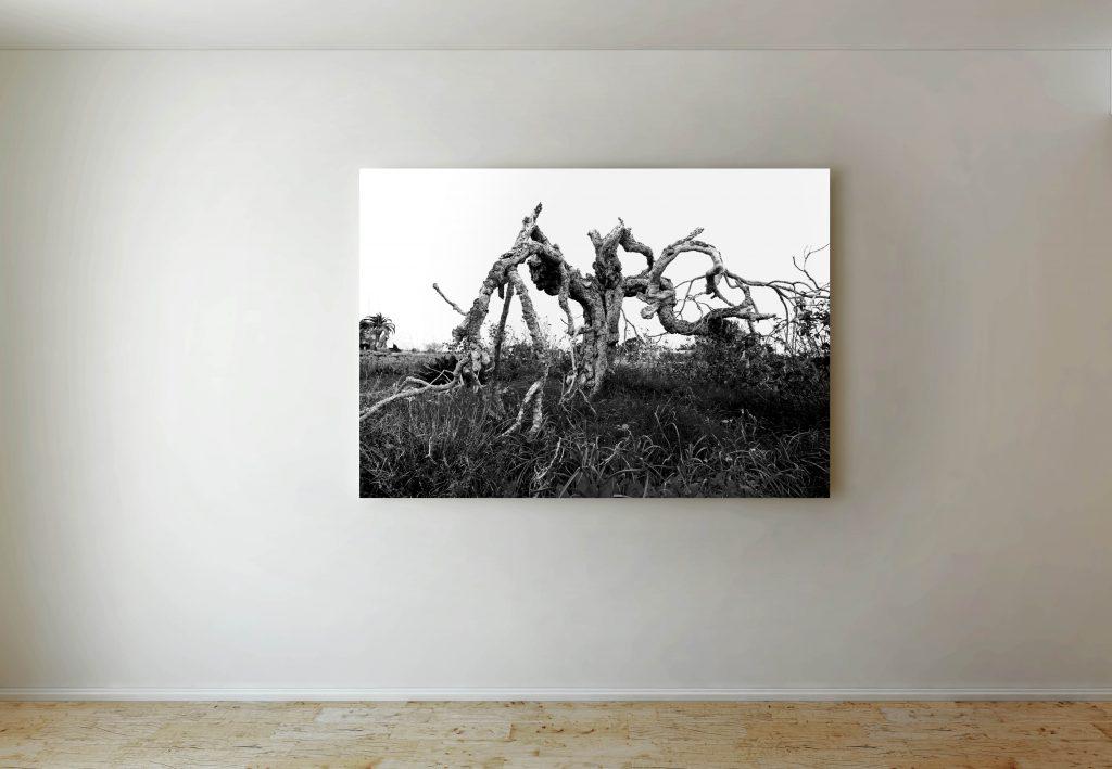 fotografía de Formentera en blanco y negro sobre lienzo